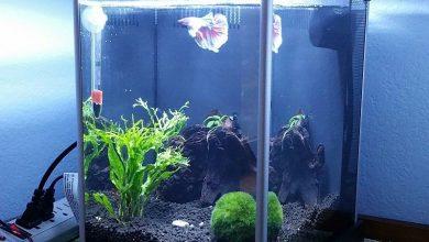 Photo of Best 10 liter Aquarium