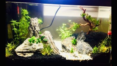 Photo of The Best 20 Liter Aquariums