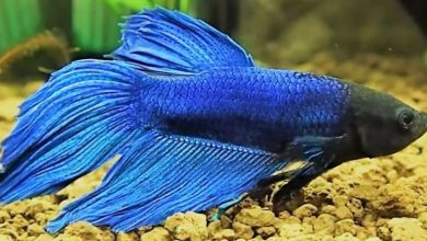 Photo of Best Aquariums For Betta