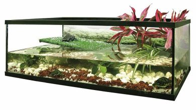 Photo of Best Aquariums For Turtles