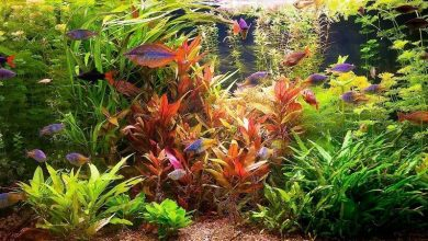 Photo of Tropical Fish