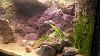 Photo of Best Sand For Aquarium