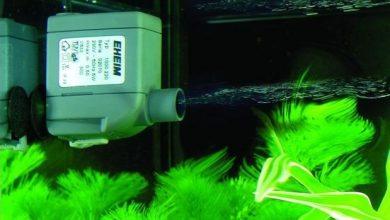 Photo of The Best Pump For Aquarium