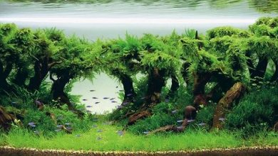 Photo of The Best Aquarium Plant Compost