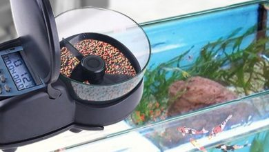 Photo of Best Automatic Feeders for Fish