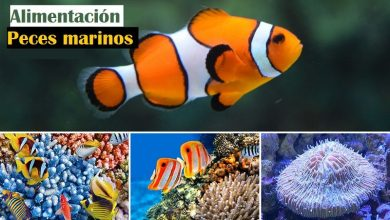 Photo of Marine Fish Food