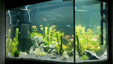 Photo of 10 Warm Water Fish for Beginners