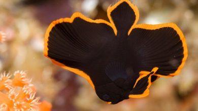 Photo of Epiphids