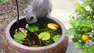 Photo of How to make a pond