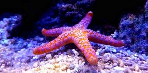 Photo of Sea stars