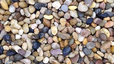 Photo of Best Gravel for Aquarium