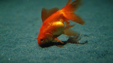 Photo of Drops in Aquarium Fish