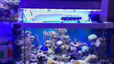 Photo of Lighting in the Aquarium