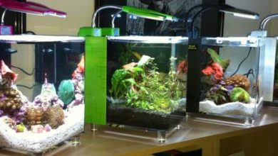 Photo of Best Nano Aquariums