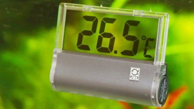 Photo of Best Aquarium Thermometers
