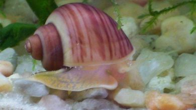 Photo of Mollusks