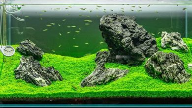 Photo of Best Upholstery Plants for Aquarium