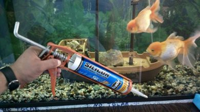 Photo of The Best Silicone For Aquariums