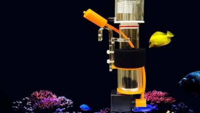 Photo of Best Skimmer For Marine Aquarium